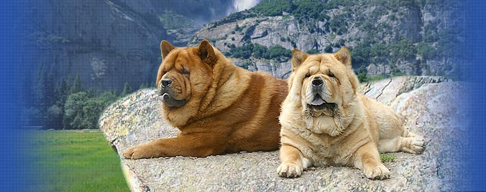 �������� ���-��� ���� ��� ����� CHOW-CHOW Smooth Kennel LOVE STORY