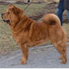 Chow-chow red smooth TI AI SHI PLUSH S SERGIEVA POSADA
