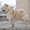 Chow-chow cream smooth WHITE VELVET SNEZHNY BARS
